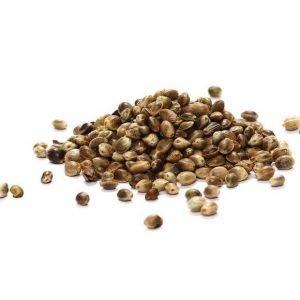 Biologische zaden voor jouw moestuinbak