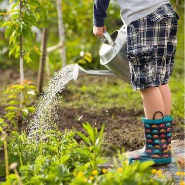 Kweken van eigen groenten, de voordelen