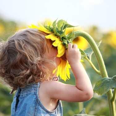 Bloemen in de moestuinbak
