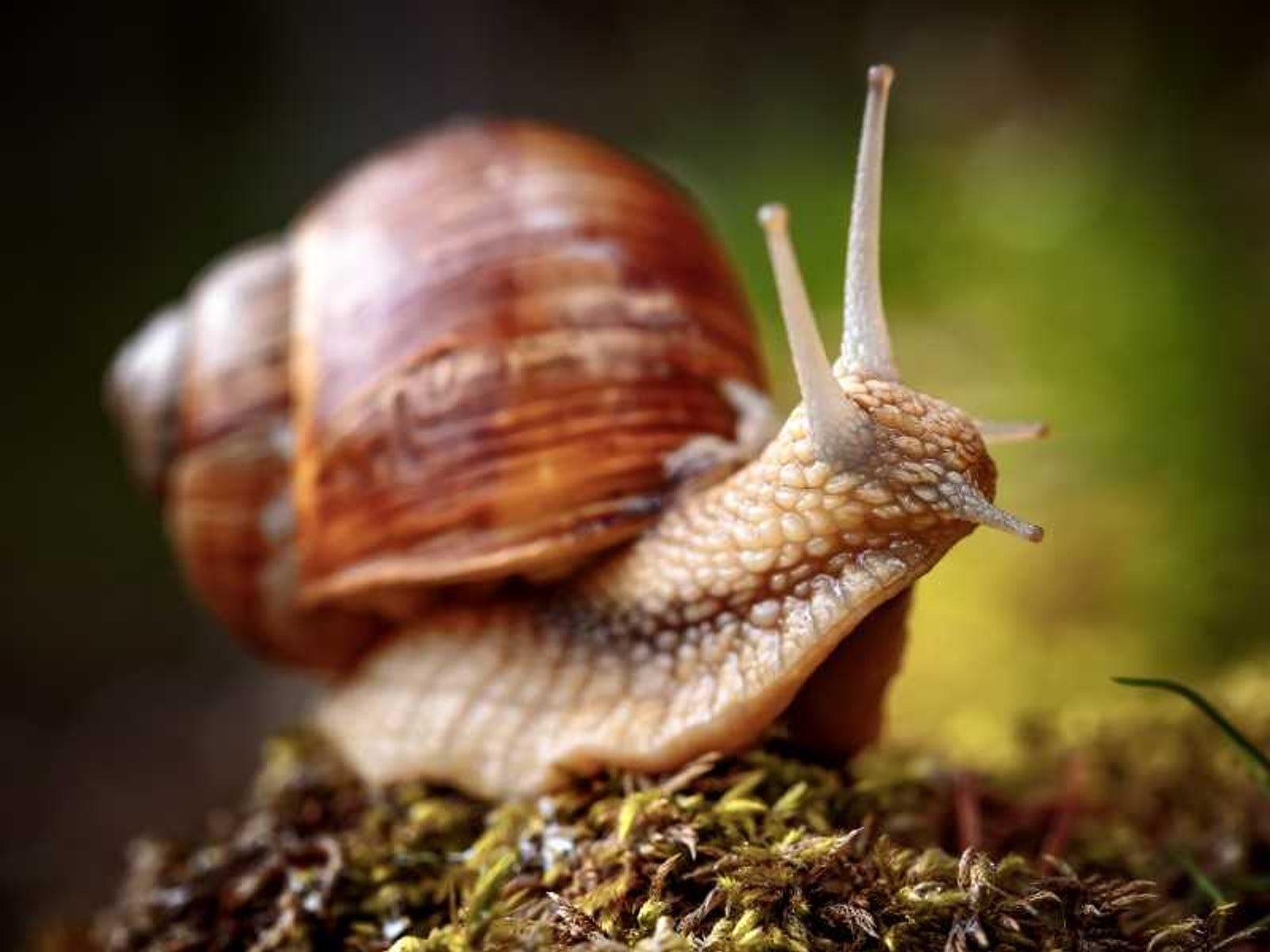 Slakken bestrijden in de moestuinbak